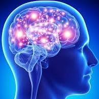 Mental Gym / Train Your Brain