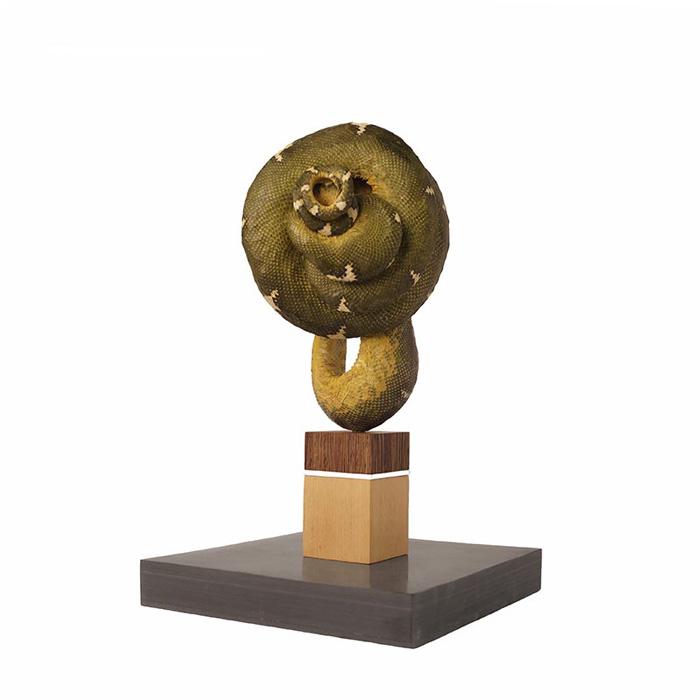 Polly Morgan, Snake Taxidermy, Sculptures