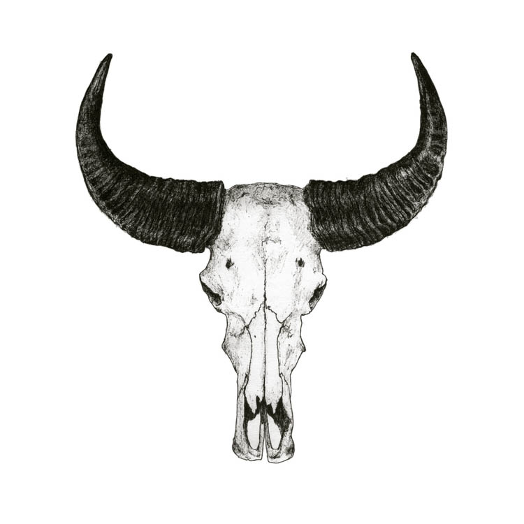 Hillary Kupish, Animal Illustrations, Skull Drawings, Once Upon A Beast, Portland Art