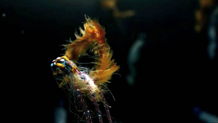 Andrew Huang, Solipsist, Fashion Film, Bjork, Underwater, Beta Fish