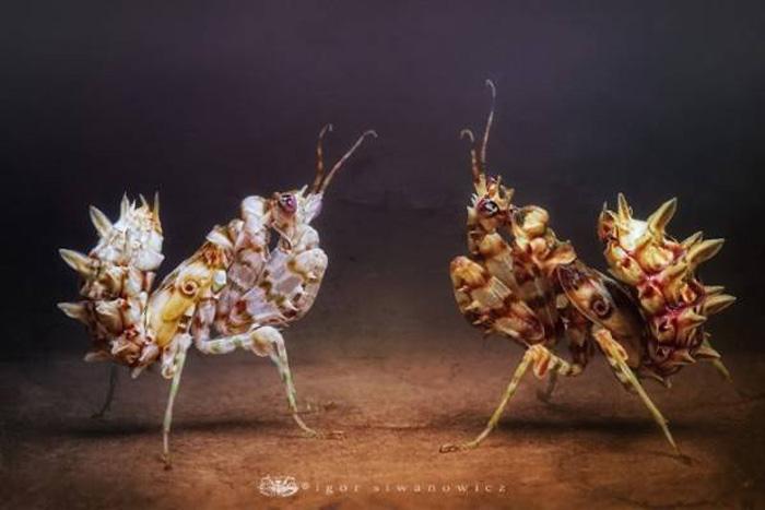 Igor Siwanowicz, Macro Insect Photography