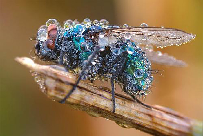 Martin Amm, macro, insect, photography, water droplets,
