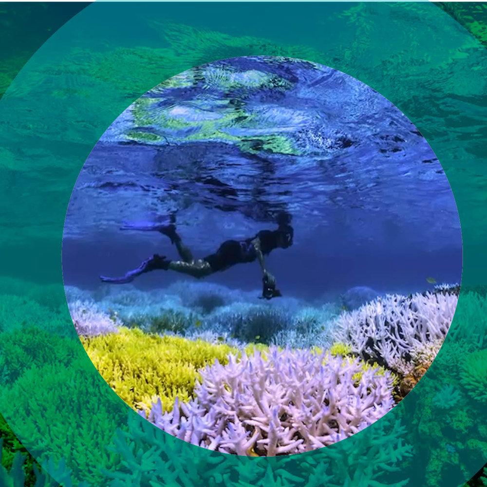 Chasing Coral6.jpg