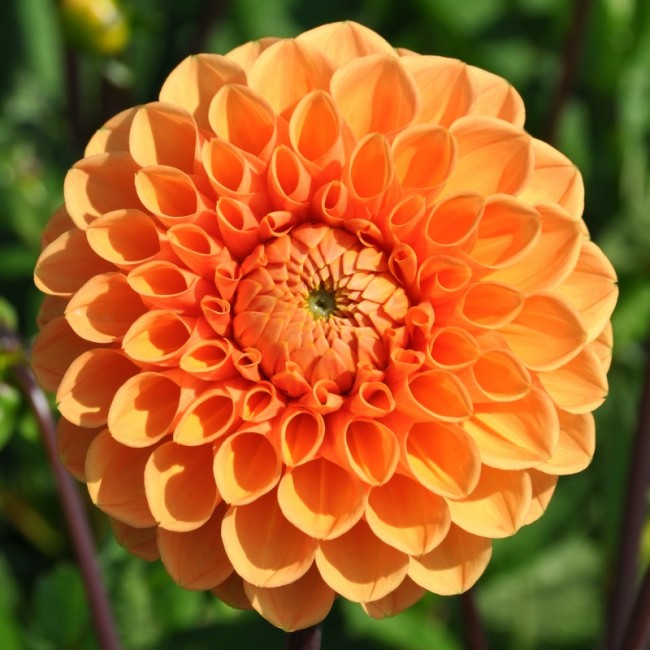 Sylvia orange.jpg