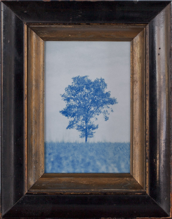 My Tree         Pigment print, antique frame