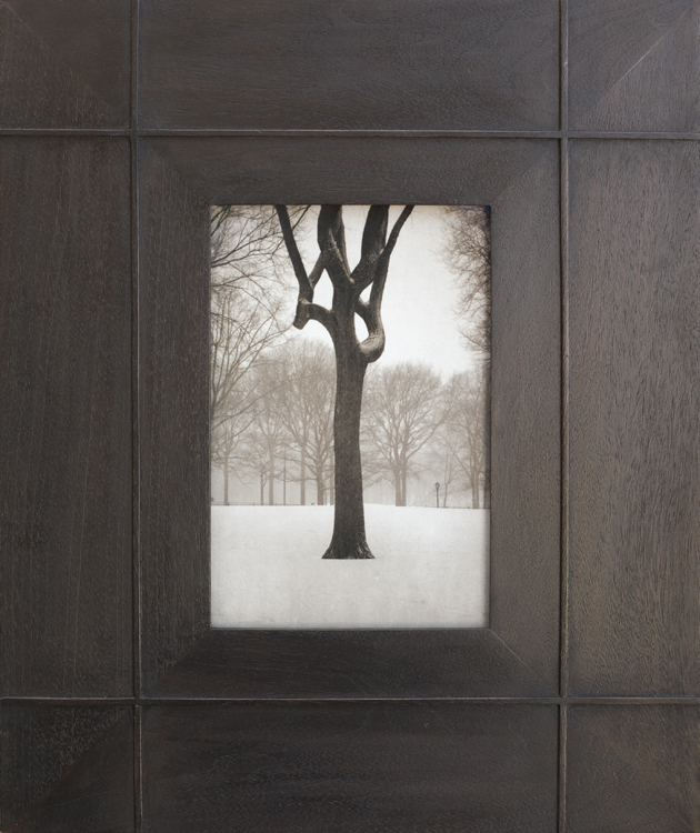 Tree, Central Park            pigment print, artist made frame