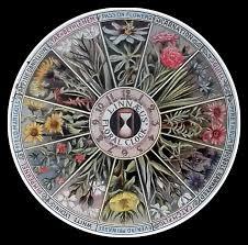 Linnaeus'un Çiçek Saati Şablonu