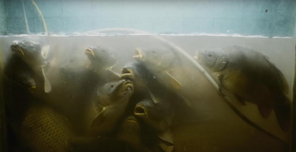 """Stuber, hipermarketin gıda depolama alanındaki balıkların hayatıyla karakterlerinin (ve ait oldukları sosyal sınıfın) hayatı arasında farkı sorgulatıyor.. """"Bunlar aynı"""" demiyor, balıklar üzerinden tartışıyor…  Stuber'in sınıfsal mücadeleye atıfta bulunan ve çelişkileri tartıştığı bir diğer metaforik mekan hipermarketin çöplüğü... Tüketici ve işveren anlaşması karşısında işçilerin tavrını, sınıfsal yaklaşım farklarını kendince en açık tartıştığı yer burası..."""