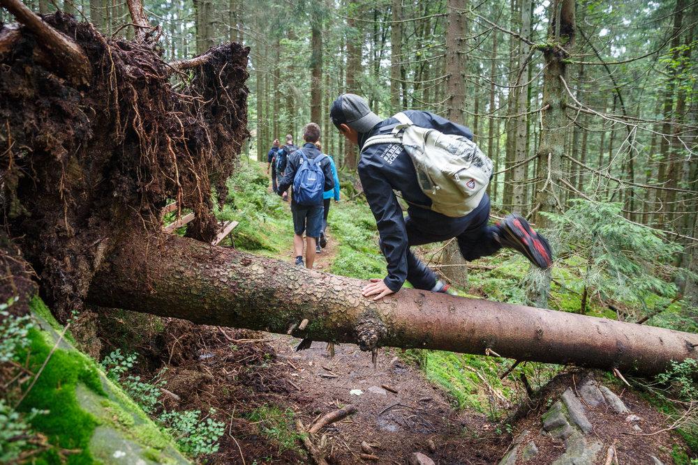 Der Wald nimmt nicht immer Rücksicht auf Wege.