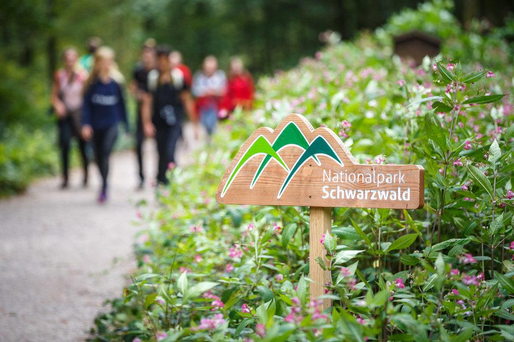 Im Nationalpark Schwarzwald unterwegs.