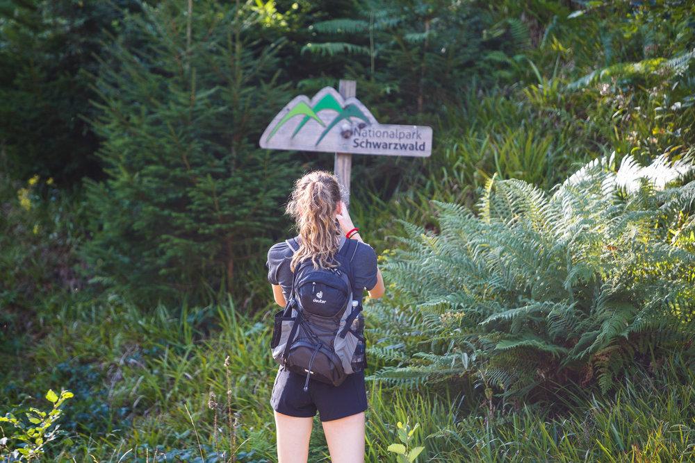 Durch den Nationalpark Schwarzwald!