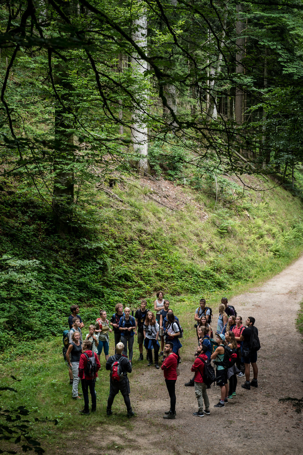Im Bergmischwald bei Allerheiligen.