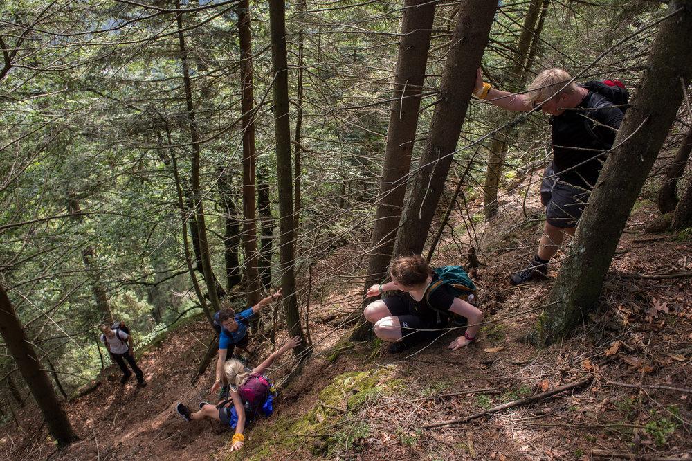 Rutschbahn durch den Wald.