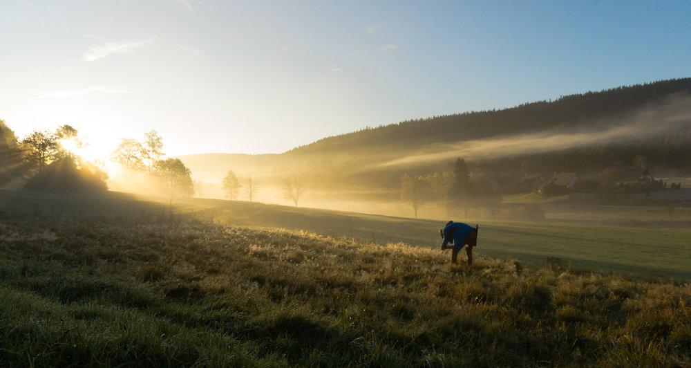 Morgendliche Fotografie.  Foto: Simon Fuhrmann