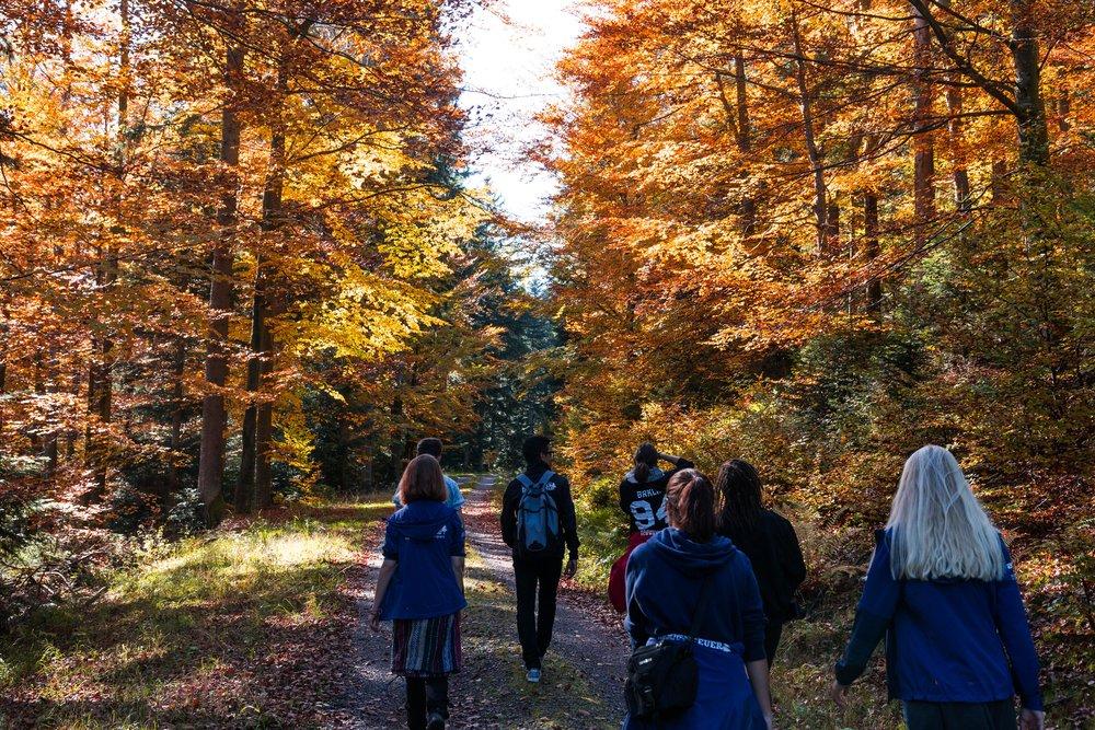 Herbstwanderung. Foto: Niklas Koch