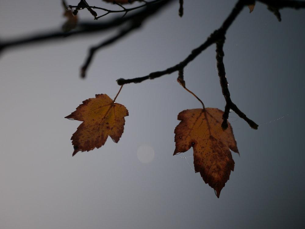 Bunte Blätter.  Foto: Larissa Möckel