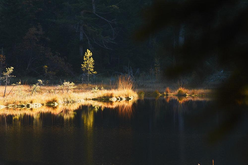 Kontraste am Huzenbacher See.