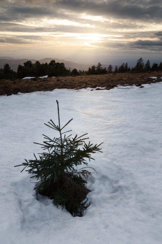Die letzten Reste des Winters erkunden.