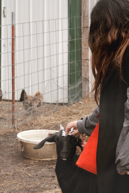 Farm sweet farm Oklahoma 1.JPG