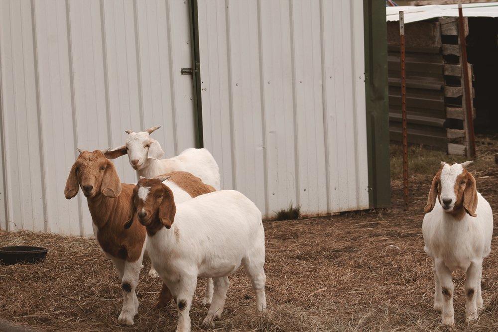 Farm sweet farm Oklahoma 3.JPG