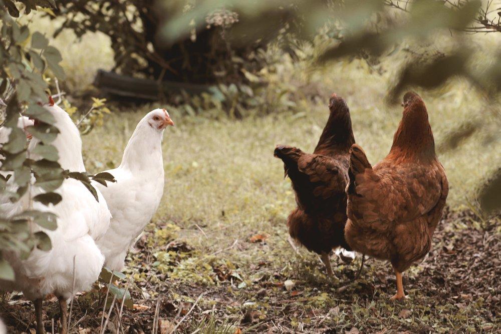 Farm sweet farm Oklahoma 8.JPG