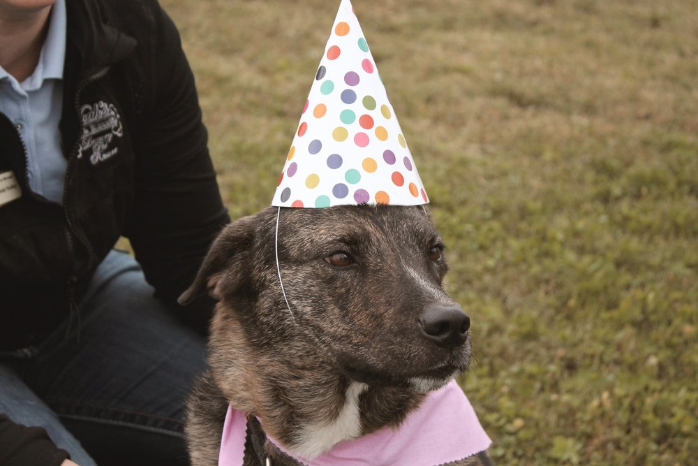 Pet party 17.JPG