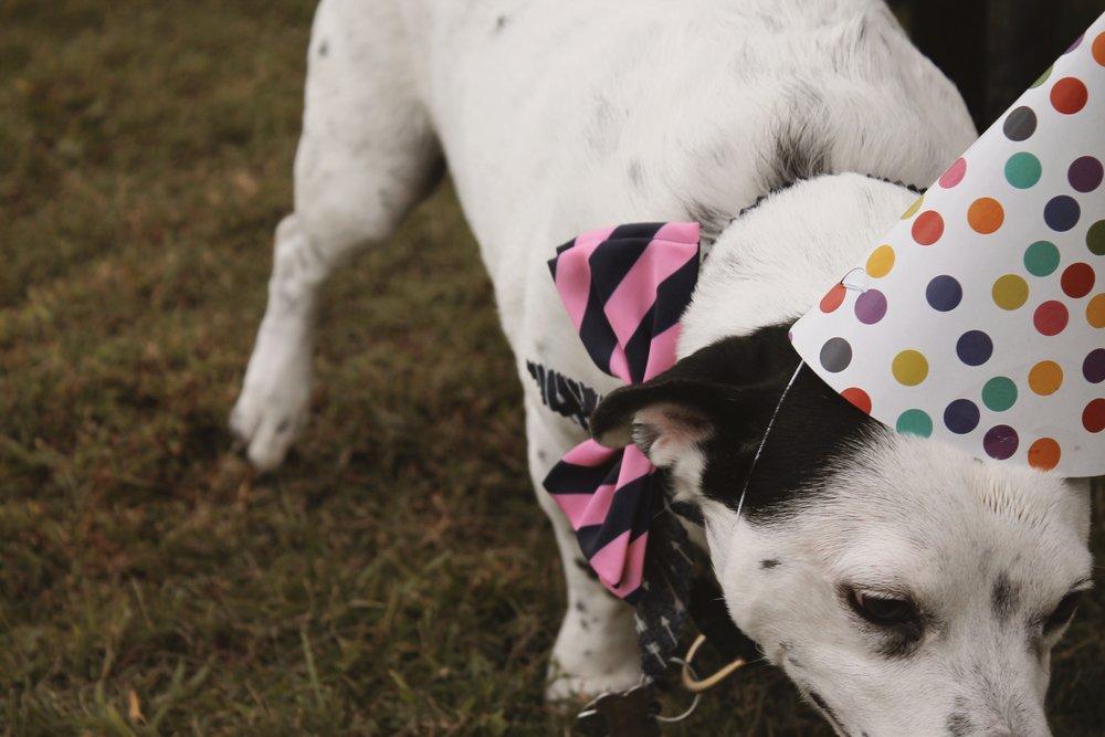 Pet party 24.JPG