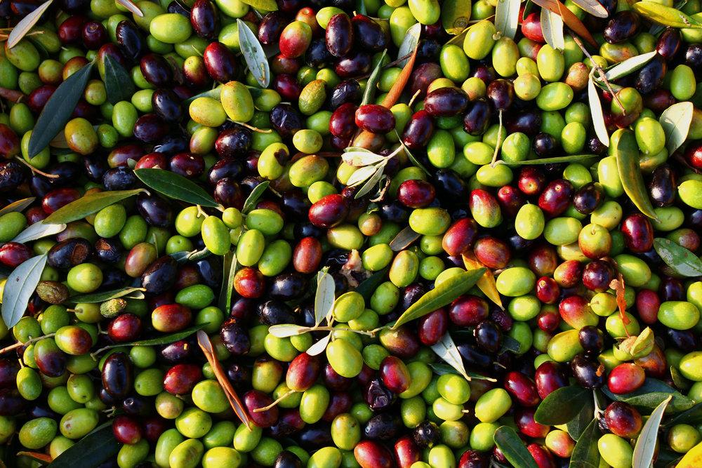 bago-d-uva-360-portugal-tours-olives