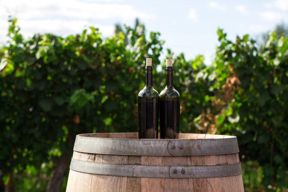 Route des Vins& Gastronomies - Faite Sauter le Bouchon de la Culture Portugaise et Croquez dans un Morceau de notre Histoire.