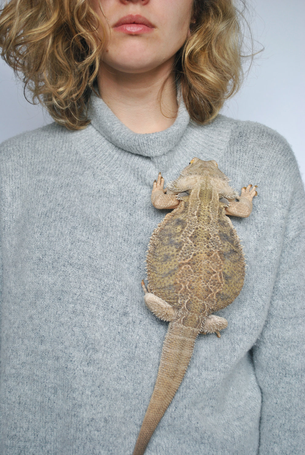 Marley - The Bearded Dragon