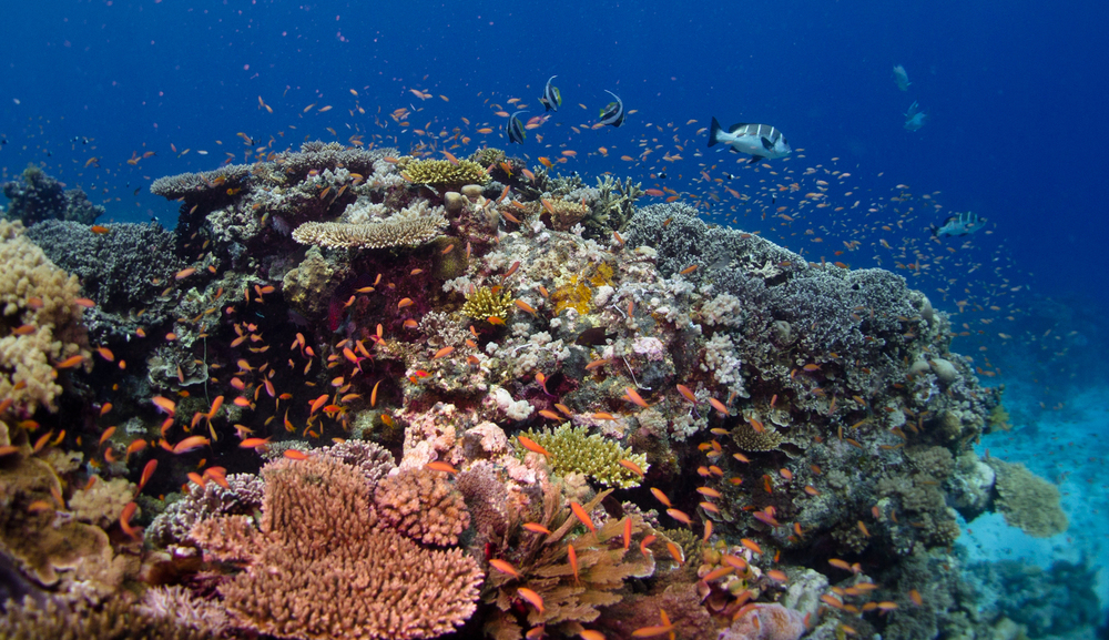 Coral reefs in the northern Mozambique channel, a potential refuge for corals from climate change. Photo: Emily Darling