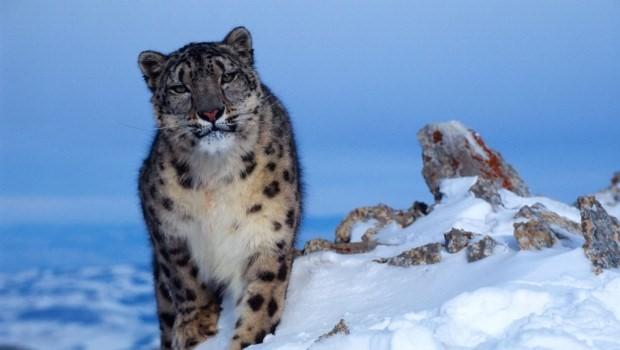 ©Klein & Hubert / WWF