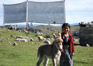 Access to drinkable water is a growing problem for human populations across the world. When the right conditions exist, fog collectors in Guatemala allow villagers access to cheap water that is available immediately. Photo: Girl and baby donkey, Tojquia, Guatemala, 2008. FogQuest/Melissa Rosato. Used with permission.
