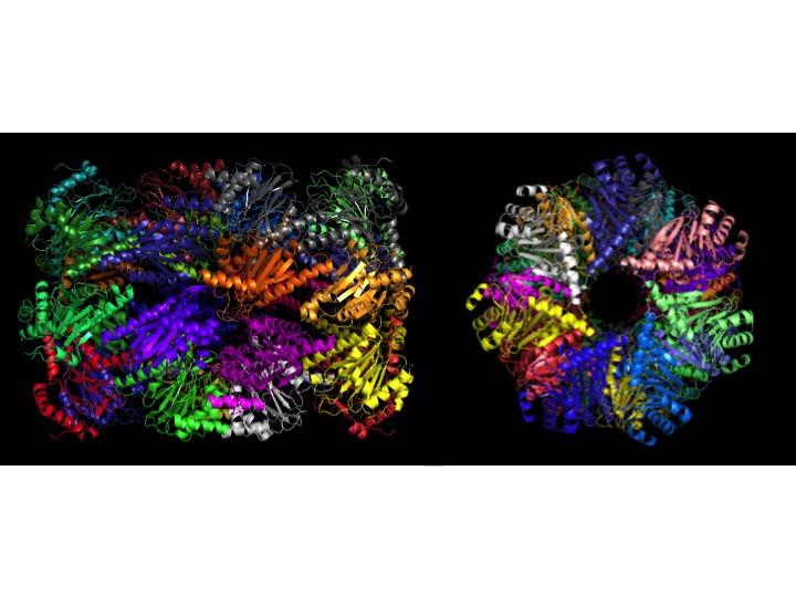 Mtb proteasome core (PrcBA) (Lin et al., Mol Micro 59: 1417, 2006).