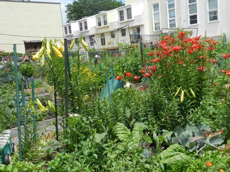 Plot-at-South-Street-Community-Garden-4.jpg