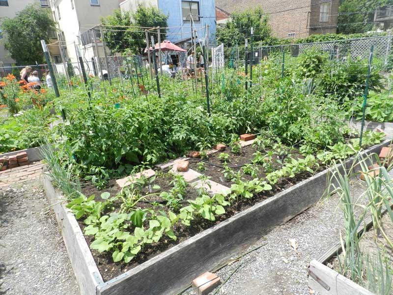 South-Street-community-Garden-plot.jpg