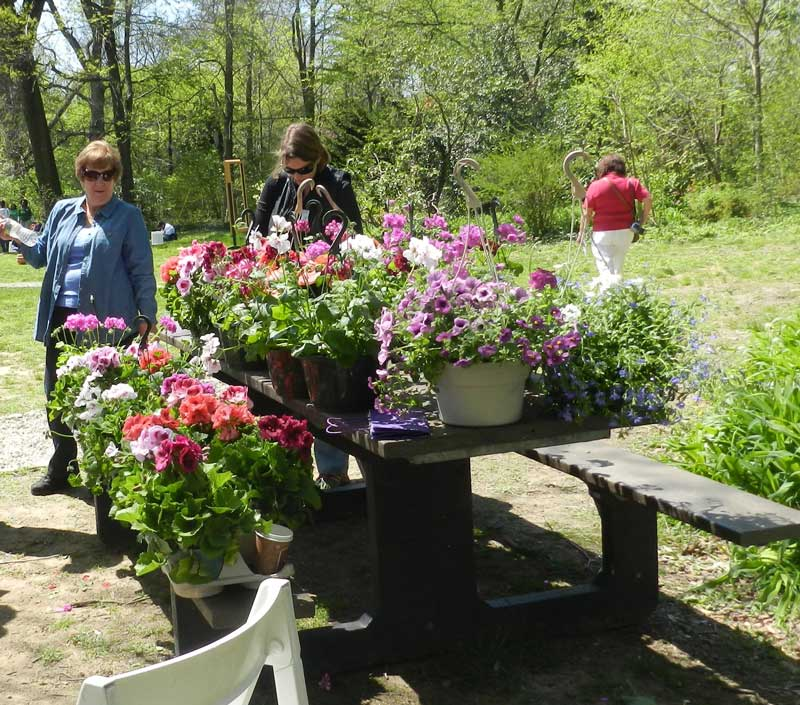 Awbury-Arboretum-flowers.jpg