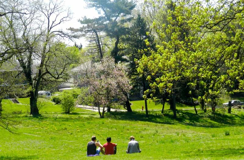 Awbury-Arboretum-lanscaping.jpg