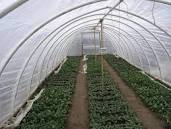 Hoop house where propogation takes place