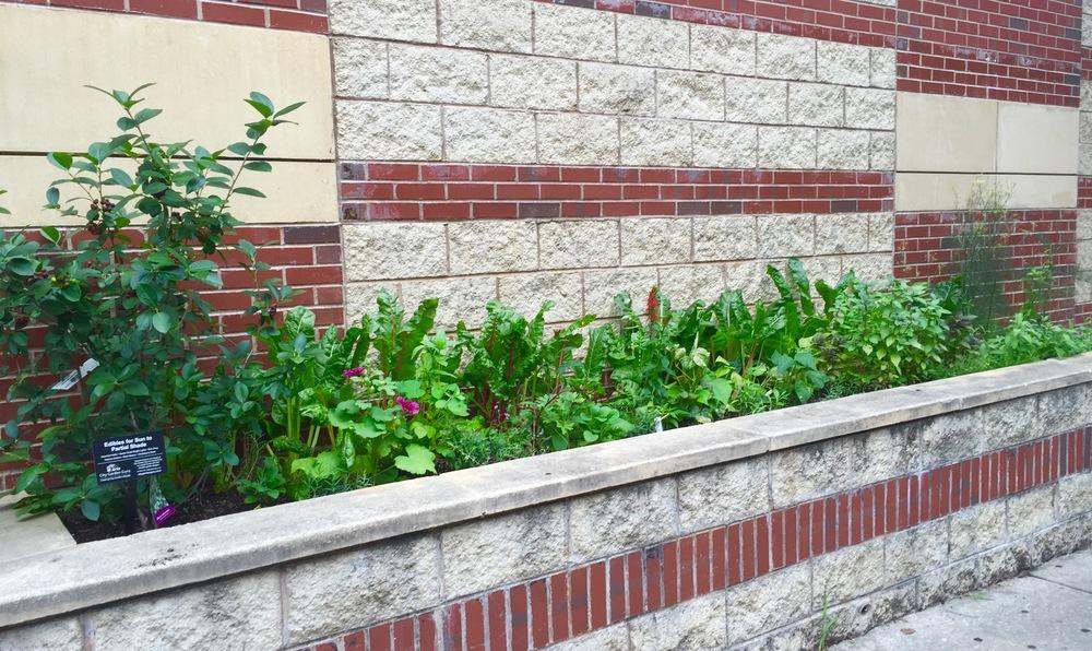 Herb/Edible Garden July