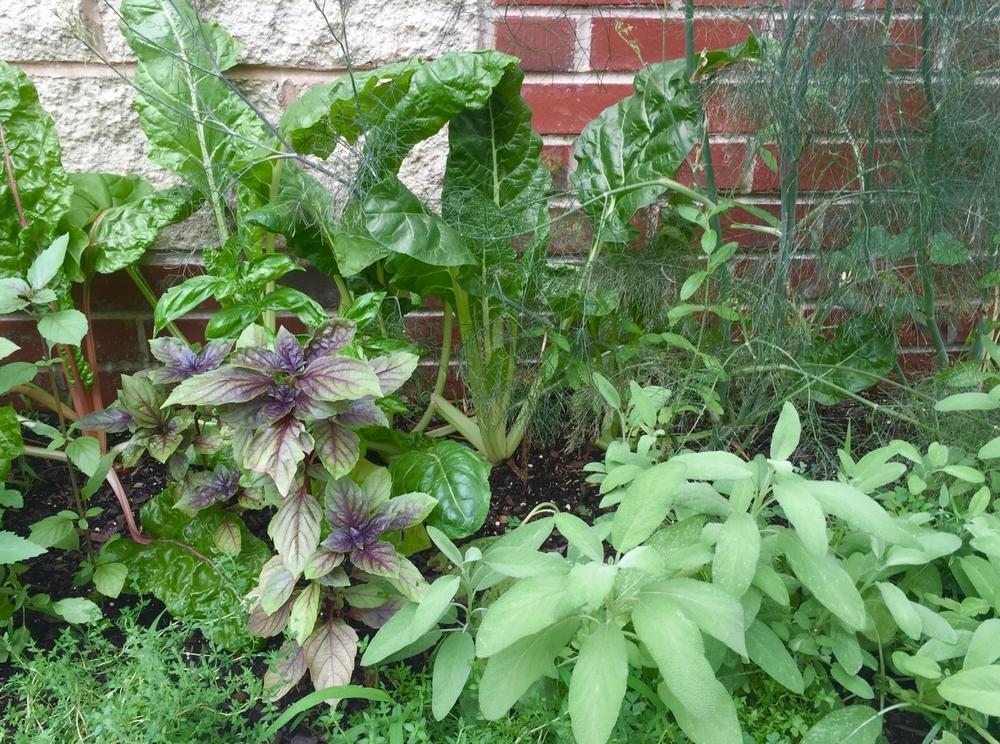 Herb/Edible Garden 2