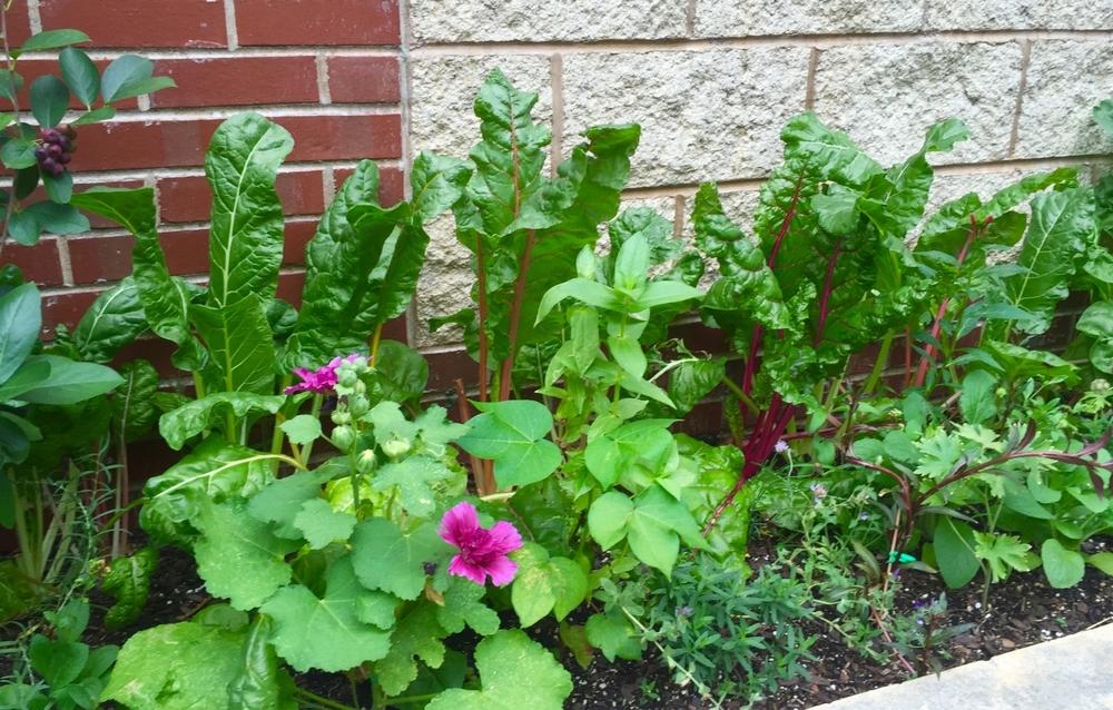 Herb/Edible Garden 3