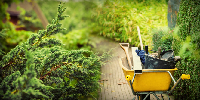 My tools of the trade
