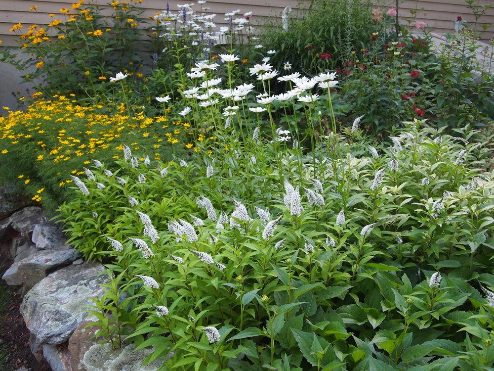 Ornamental - Learn more about ornamental gardensView ornamental garden gallery