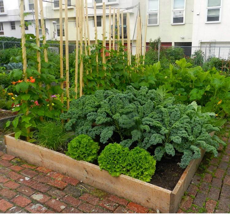 Edible - Can feature multiple seasons of food and herbs just outside your door.Learn more about gardening with edible plantsView edible garden gallery
