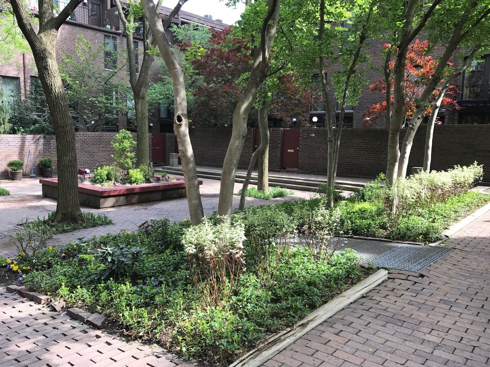 Four Season - Gardens that offer beauty, interest and movement for all four seasons via foliage, blooms, bark interest, form, fragrance and color.