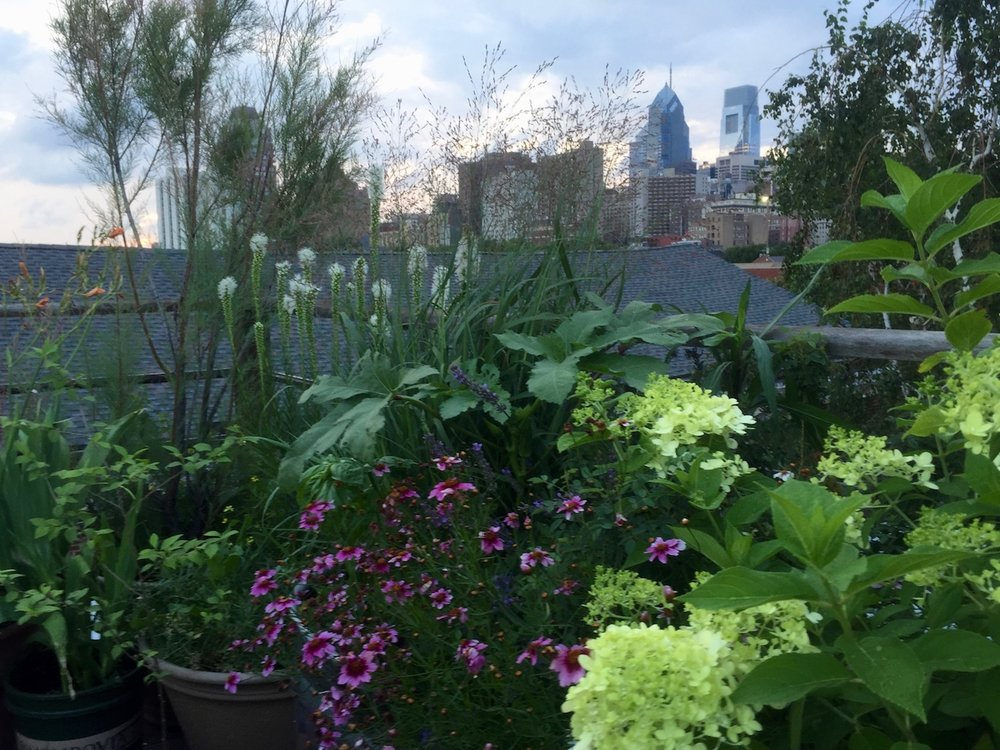 Bella Vista Roof Deck City View.jpg