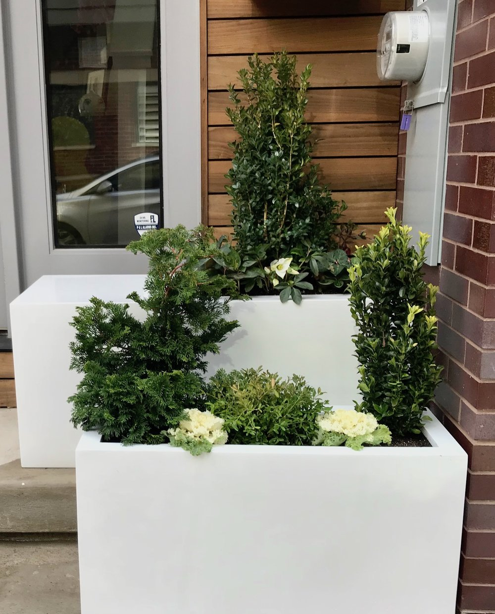 Evergreen White and Green Evergreen Containers AFTER