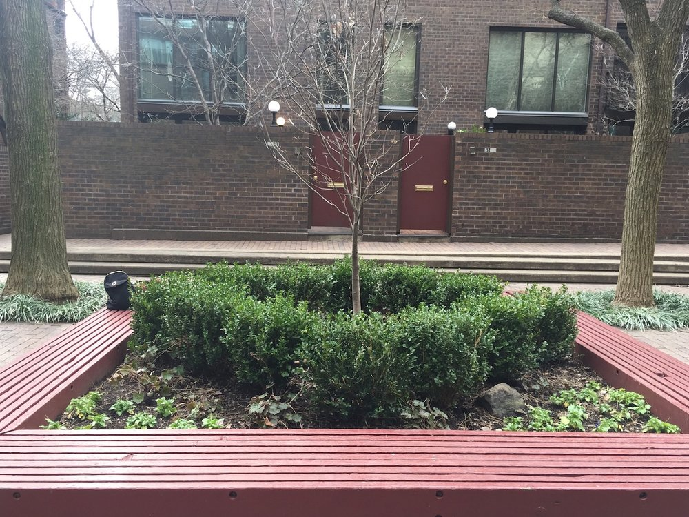 Center Container with Boxwoods and Dead Tree BEFORE
