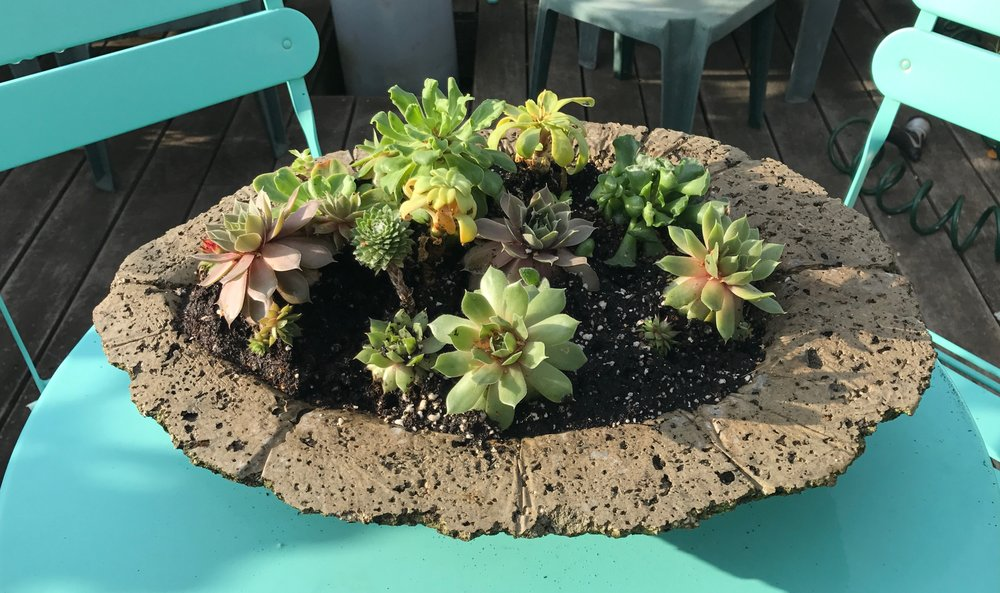 Succulents in Hypertufa